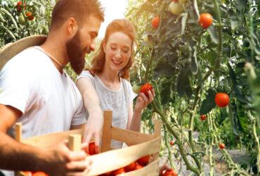Υπομετρο 3.1. για νέους αγρότες